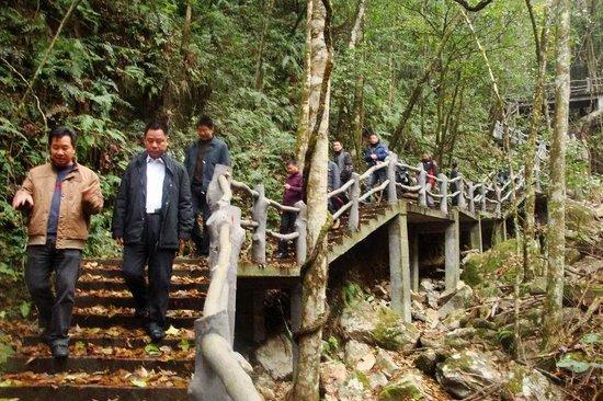 Wuyanling National Nature Reserve of Zhejiang