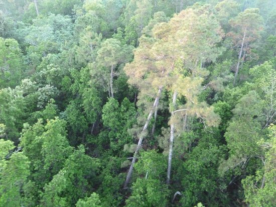 Orlando Balloon Rides: flying low over a forest
