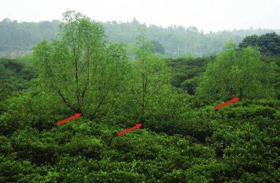 Jiulong River Mangrove Wetlands