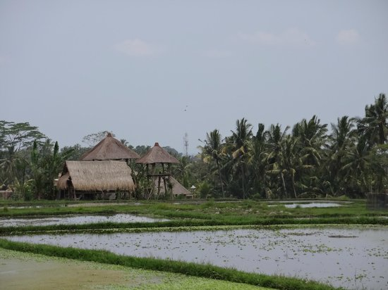 Villa Awang Awang: A view from the road that is near the villa, there are a lot of rice paddies.