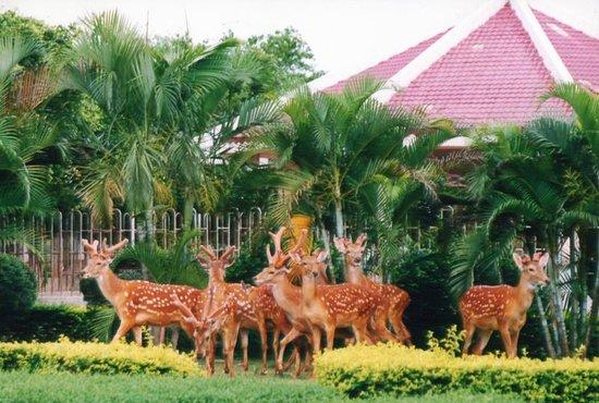 Deers Garden