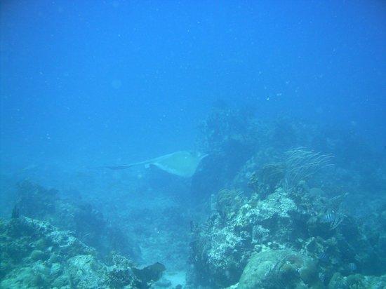 Cow and Calf Rocks : ray