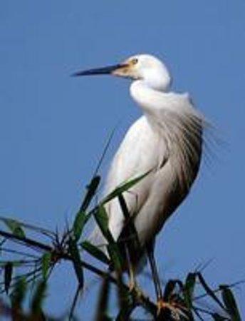Taihe Egret Reserve