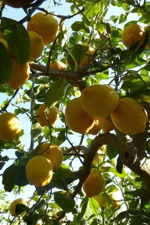 Al frantoio Valderice: Dans le jardin de Iolanda