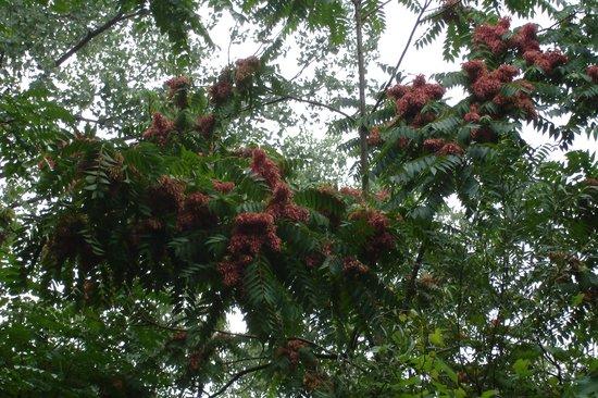 Yun Tree