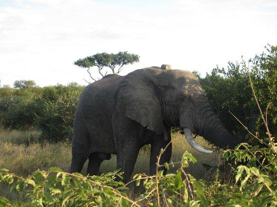 Naledi Game Lodges: Elephant Sighting