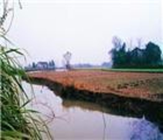 Bashidang Site