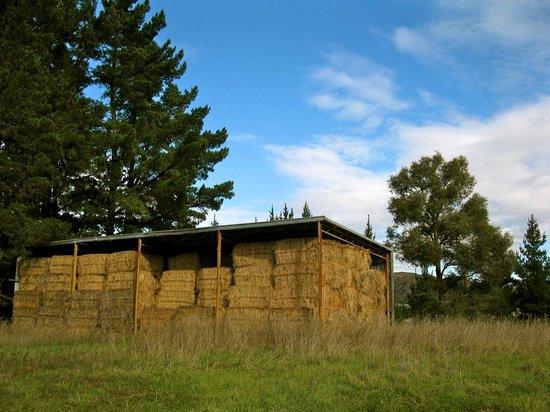 Karetu Downs Farmstay: Hay barn