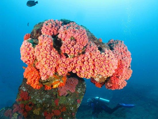 Unawatuna Diving Centre: Beautiful reef coral