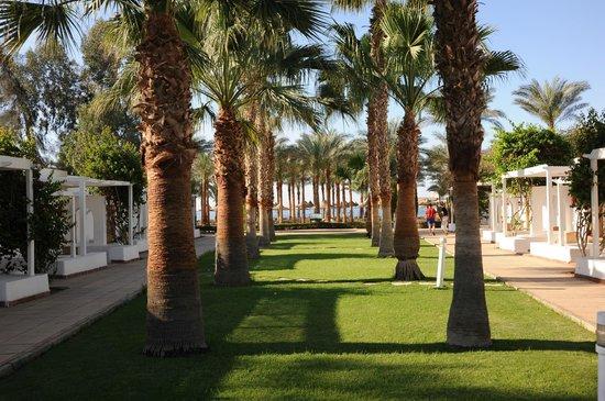 Dessole Seti Sharm Resort: General View