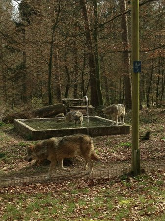 Wolfspark Werner Freund: More timber wolves