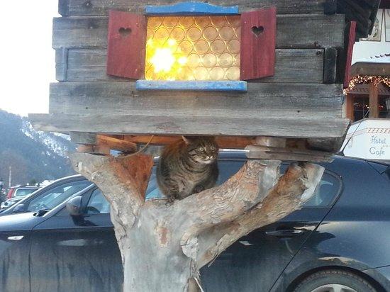 Hotel Ronce: Il gatto di casa!