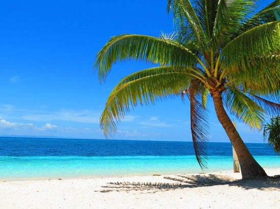 Evolution Diving Resort: Beach