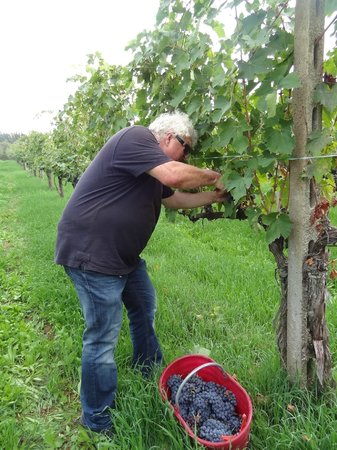 Agriturismo Il Casalino: hard work