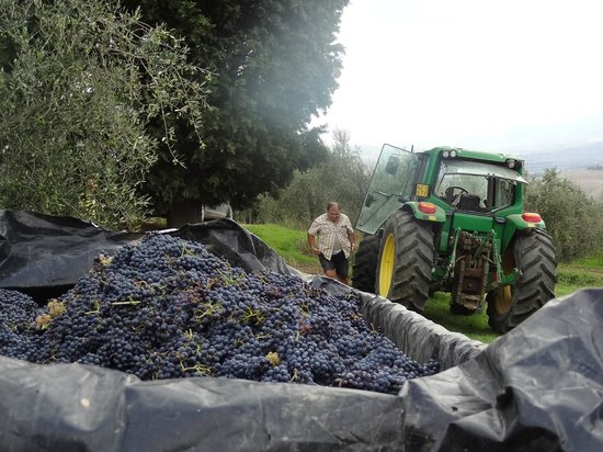 Agriturismo Il Casalino: vendemmia 2012