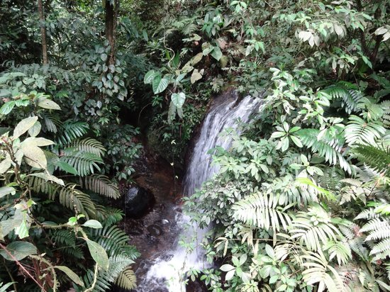 Chachagua Rainforest Eco Lodge: waterfall on morning hike on hotel grounds