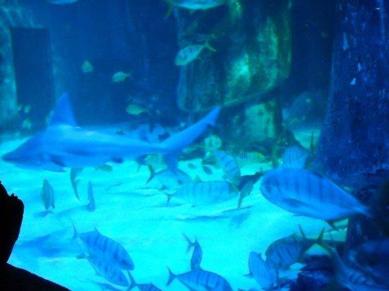 ... de vidrio - Picture of Sea Life London Aquarium, London - TripAdvisor