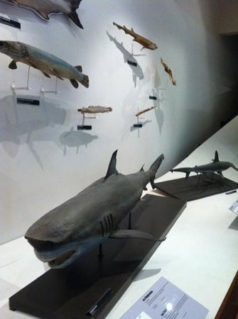 Muséum-Aquarium de Nancy : 9