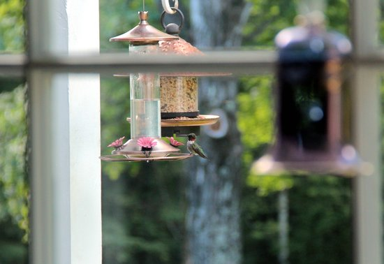 Buttonwood Inn on Mount Surprise: Hummingbirds Galore
