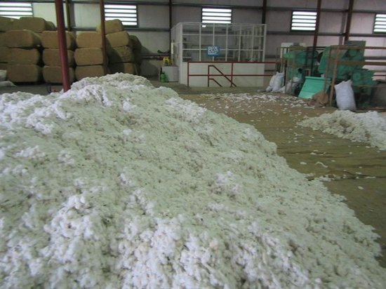 Exclusive Cottons of the Caribbean : The raw cotton waiting to be processed
