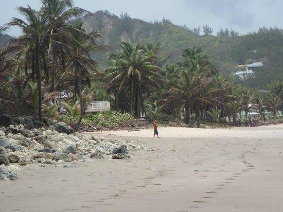 Bathsheba Beach: Beautiful, raw, beach