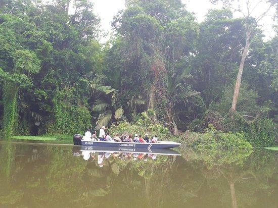 CREN Day Tours: Rainforest along our canal