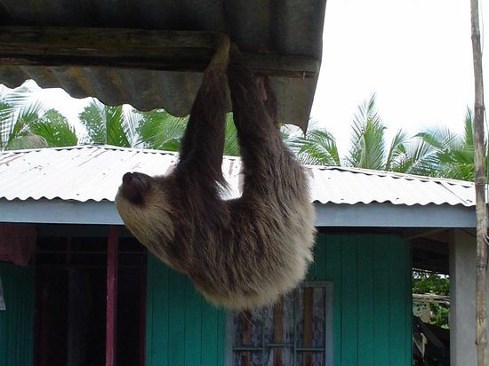 CREN Day Tours: A sloth