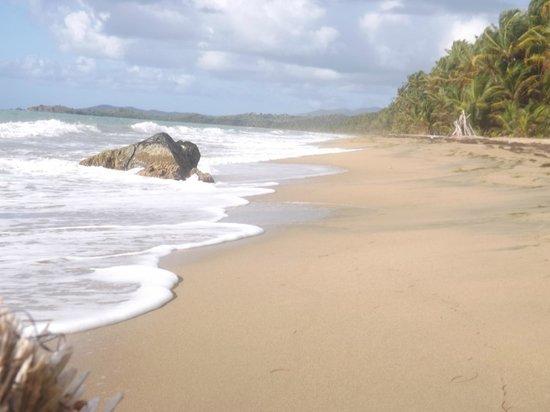 Humacao Nature Reserve: Humacao Beach