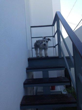 Casa Naaj Apartments: El perro saliendo del apartamento