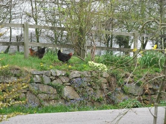 Mennabroom B&B: Shared garden