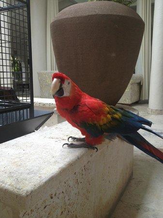Courtyard Parrots
