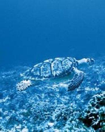 Paseo El Cedral Reef