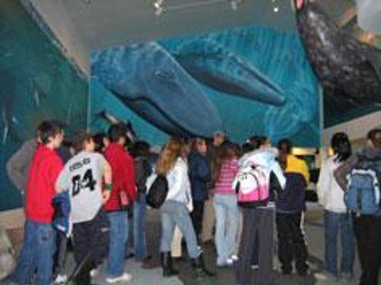 Mingan Island Cetacean Study Research Station : Museum
