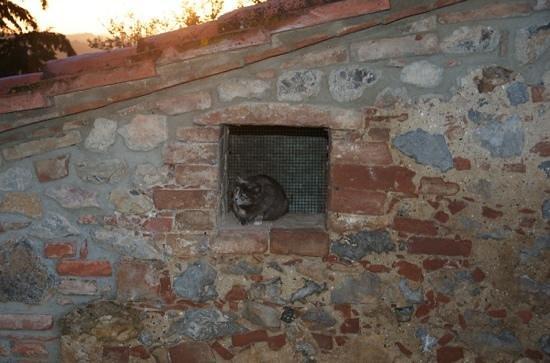 Agriturismo Sant'Anna in Camprena: miao