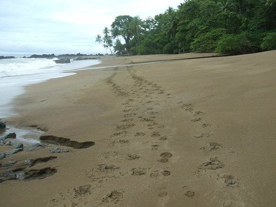 Punta Marenco Lodge: Our footprints down the beach