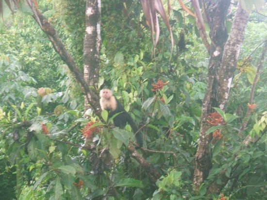 Punta Marenco Lodge: Monkey right outside our cabana