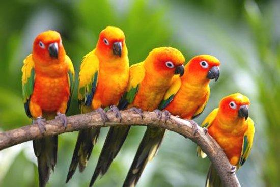 Goodwill Birds Trading Foto