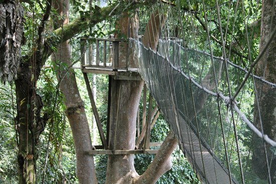 Canopy Walk: platform on the canopy