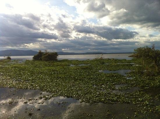Naivasha, Kenya: view of the water from the crescent