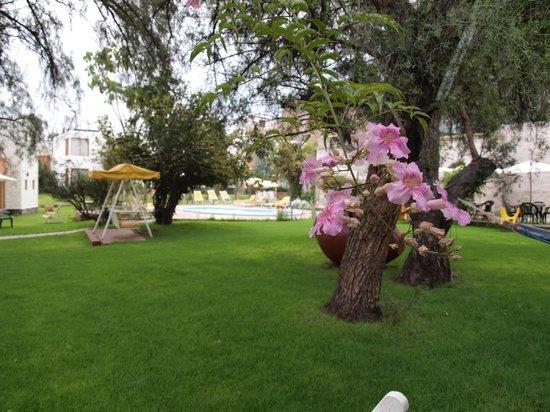 Hotel La Casa de mi Abuela : Jardin principal