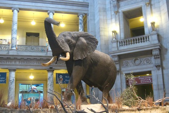 Natural History Museum Dc Field Trip