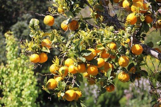 Pension Roque Faro: in the garden