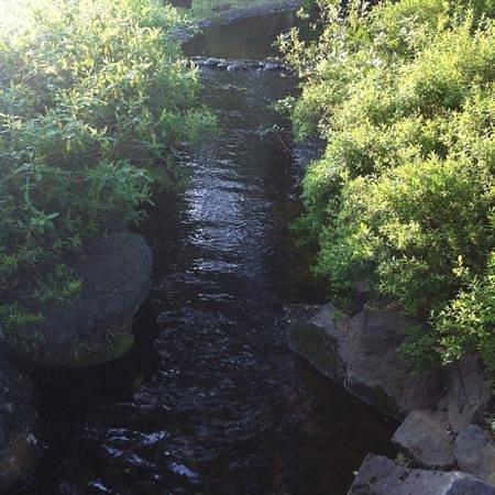 Forest Inn Showakan: お庭 水が流れて