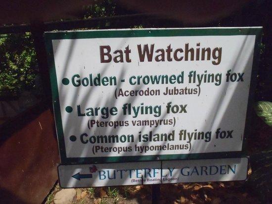Mambukal Hot Spring Resort: Bat watching