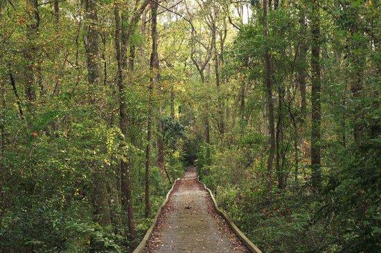 Reed Bingham State Park: Hiking Trail 2