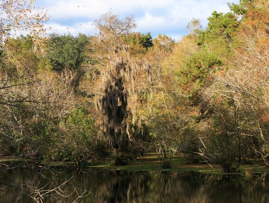 Reed Bingham State Park: Little River