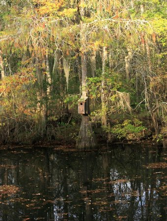 Reed Bingham State Park: Woodduck House 2