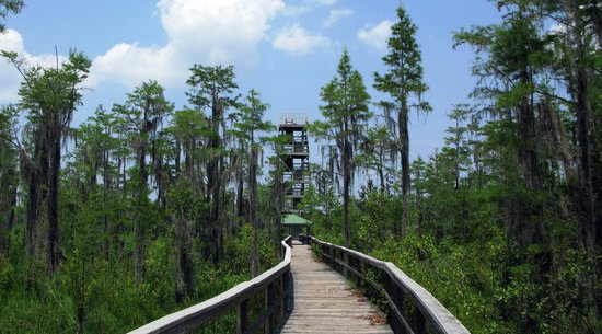 Grand Bay Wildlife Management Area: Approaching Observation Tower