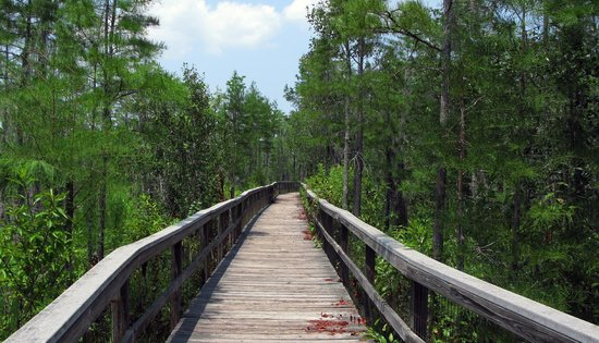 Grand Bay Wildlife Management Area: Boardwalk