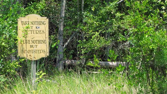 Grand Bay Wildlife Management Area: Take Nothing but Pictures...